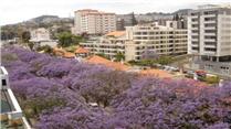 Apartment-in-Avenida-Infante-Funchal-Madeira-Portugal---Home6338-Image10